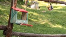 Naturando 2019: sono alle porte i campi estivi per bambini